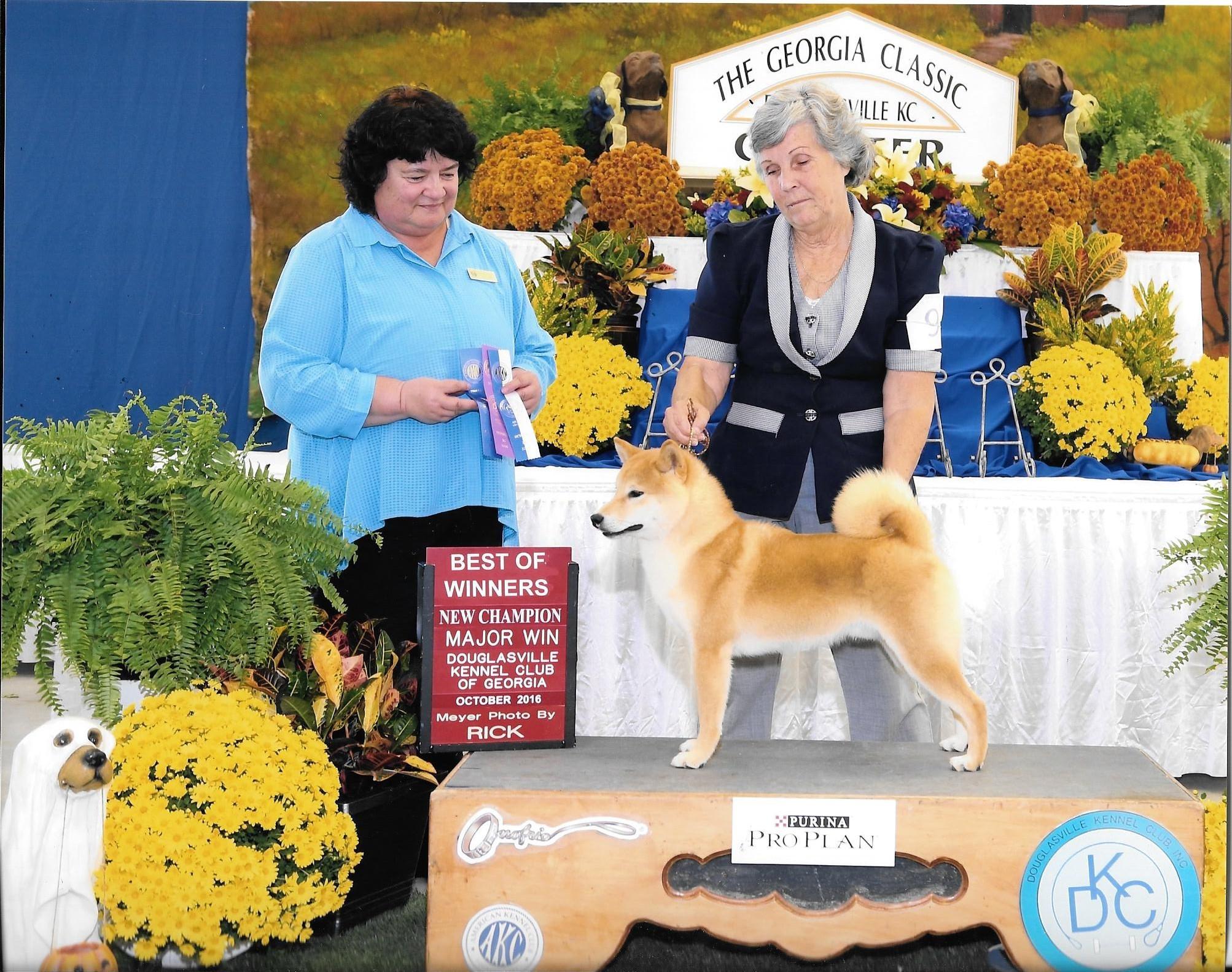 Shiba Inu Puppies Champion Shiba Inus Marma Farms